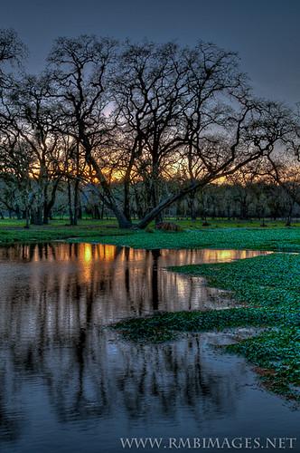 california trees sunset reflection water oak nikon marsh laguna sebastopol lagunadesantarosa rmbimages
