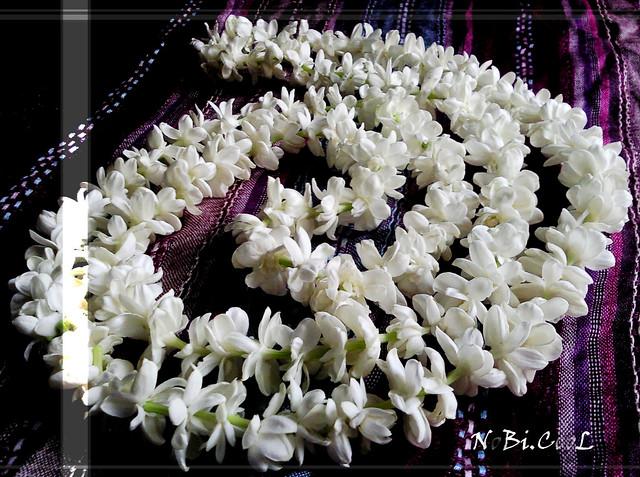A Swirl Of Jasmines