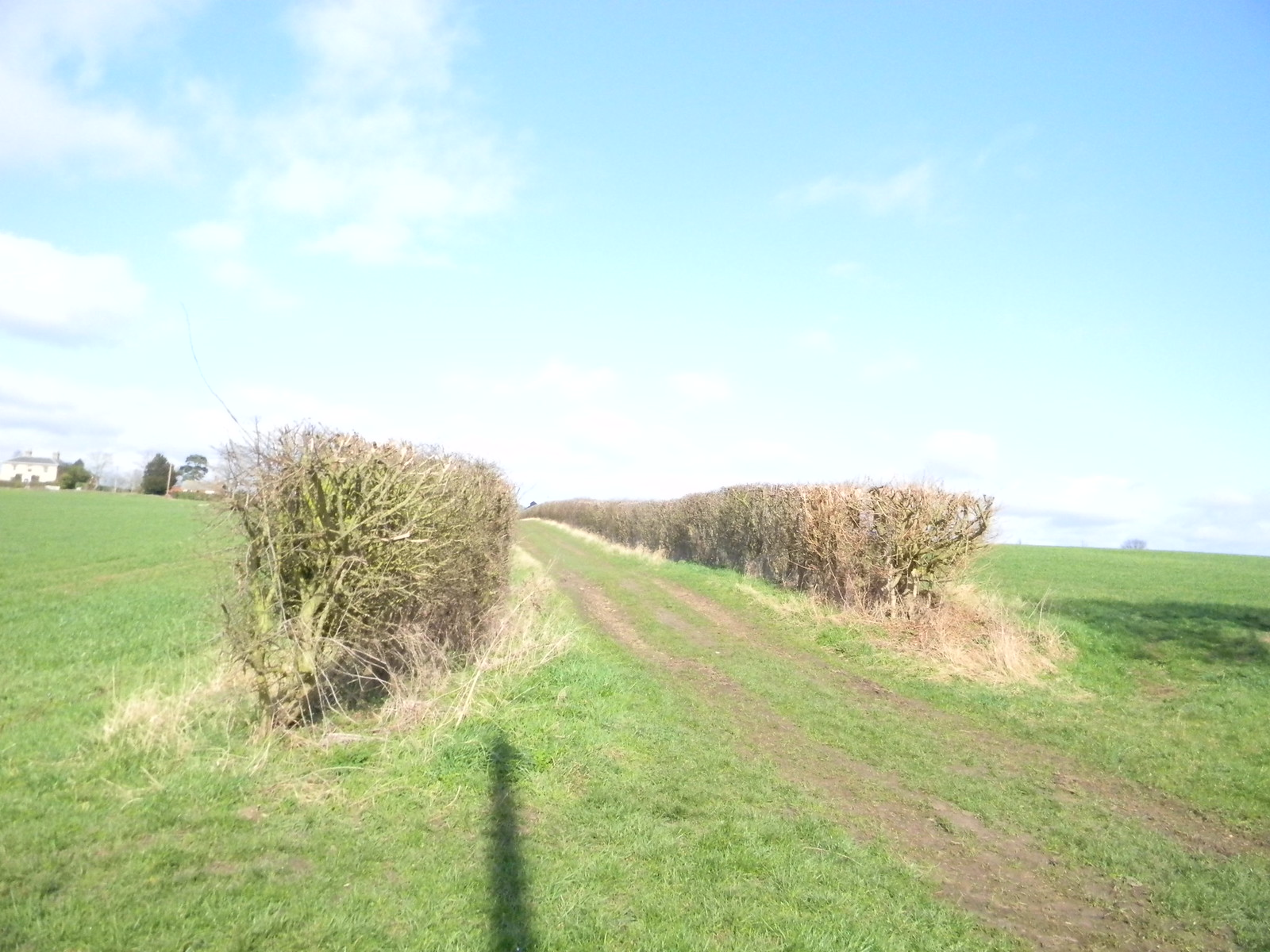 Bridleway Wakes Colne to Bures