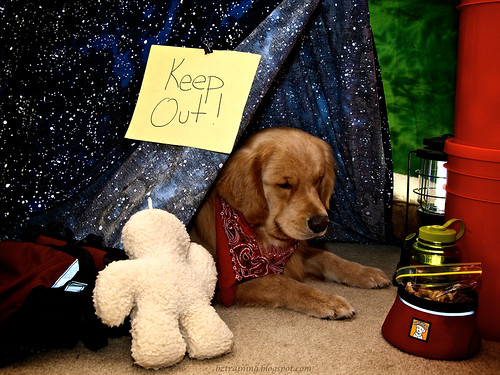 Pup Tent | by bztraining