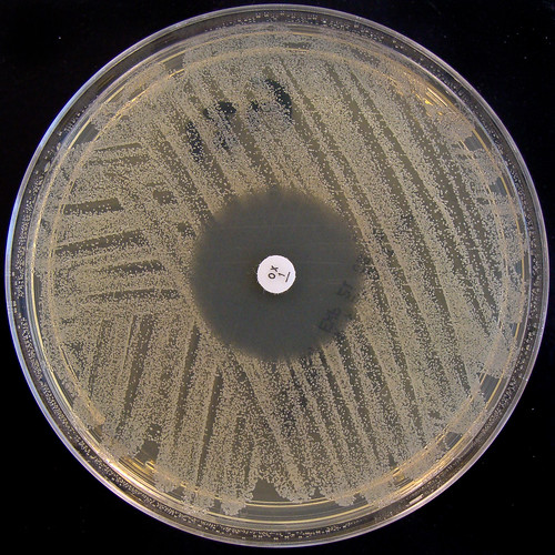 """Staphylococcus aureus NCTC 6571 - """"Oxford Staph"""" - Detail 2 - Oxacillin 