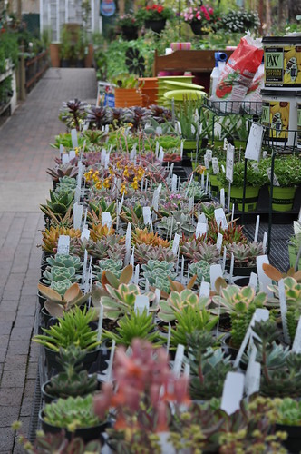 Succulents!   by The Greenery Nursery