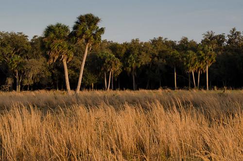nature corridor conservation agriculture wetland greenway greeninfrastructure floridawildlifecorridor fwceflickr