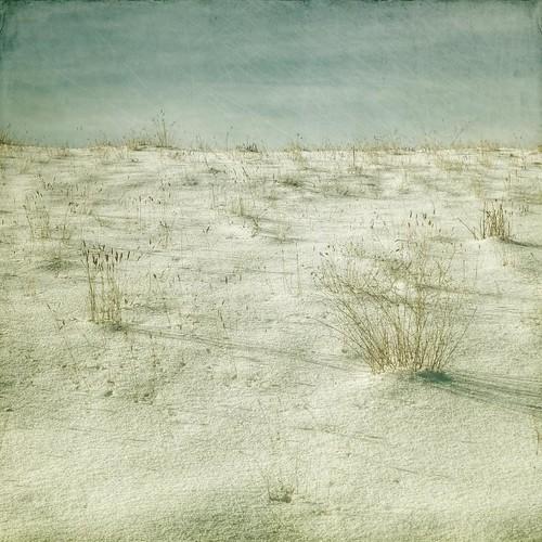 winter snow grass canon square minimal textured t1i applesandsisters