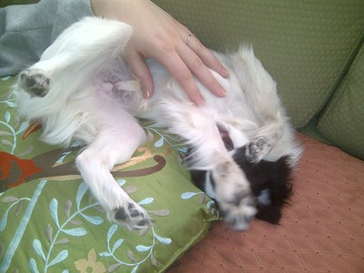 Belly Rub Time for Oliver