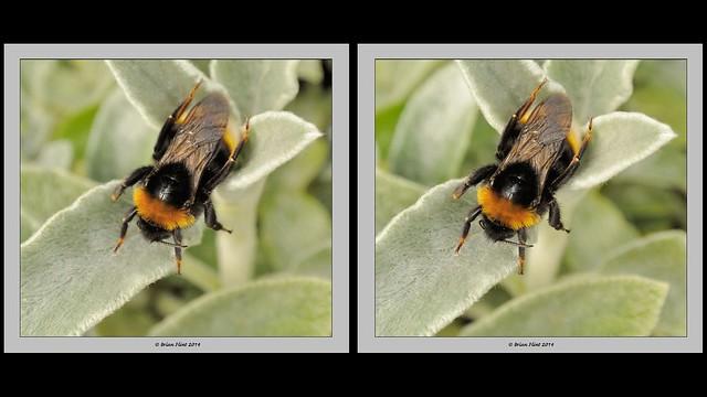 Bumblebee - 3d crossview