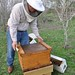 Sponsor a Hive 3