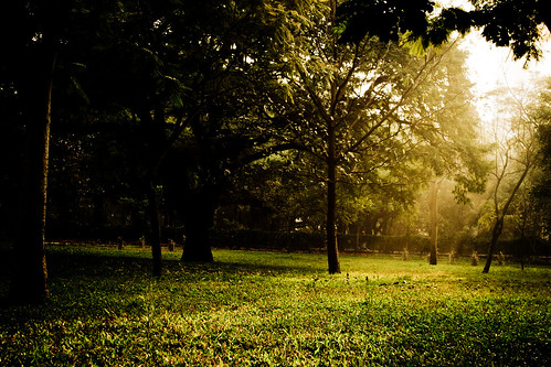 morning nature sunrise garden lights woods nikon bangalore cubbonpark lightroom d3100