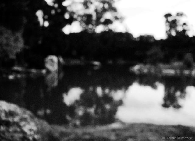 Summer Memories / Memorias del verano