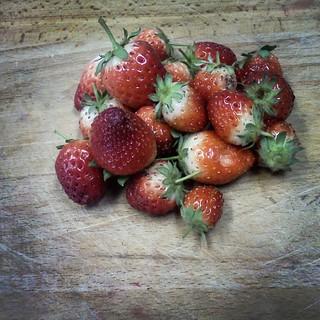 Berries | by jenniferworthen