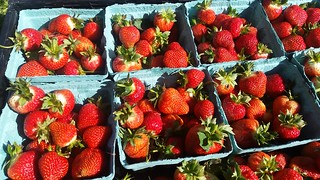 2016 Strawberries | by Lewin Farms