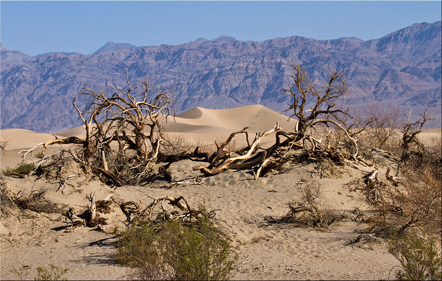 It's Hard to Survive in Death Valley