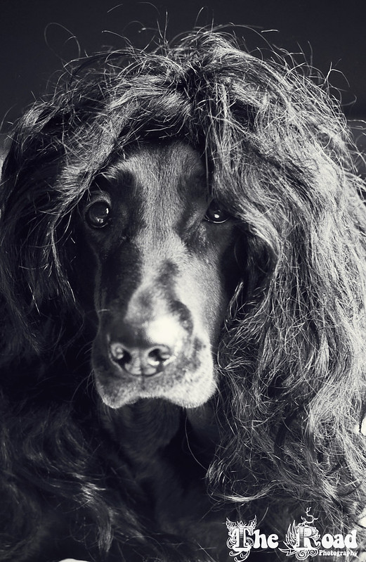 Dog moonlighting as Howard Stern