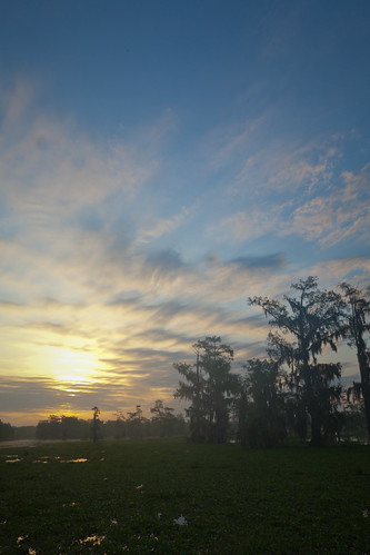 trees sunset sky sun lake tree nature sunrise scott landscape island photography photo louisiana martin wildlife bayou photograph swamp cypress etsy rise mohrman