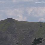 Bighorn Sheep on Ridge
