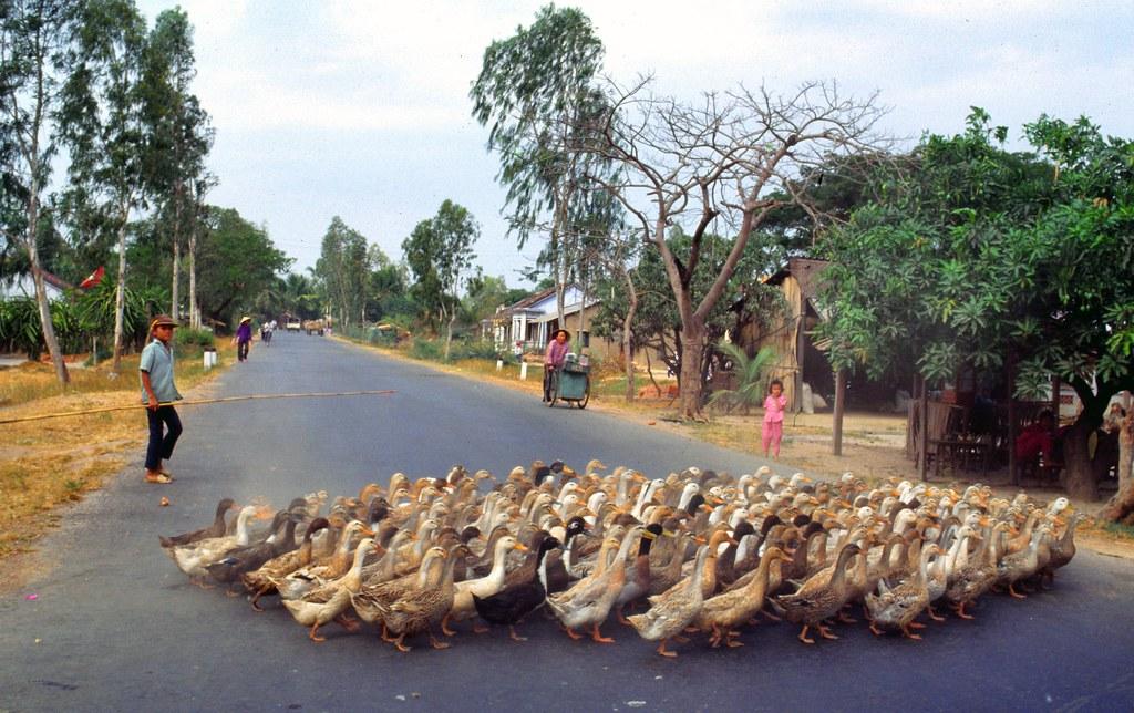 viet_centre_176 : Vietnam, vers le Centre