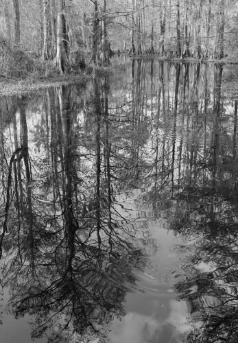 trees blackandwhite bw reflection lana nature water forest reflections landscape louisiana swamp mandeville gramlich sttammanyparish fantasticnature northlakenaturecenter dragondaggerphoto dragondaggeraward canoneosrebelt2i lanagramlich mar62012