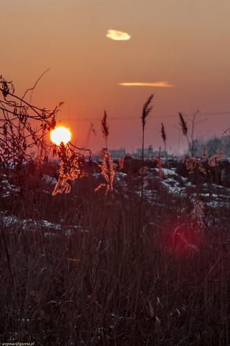 winter light sunset nature landscape bush burning redlight haeven canonef28135