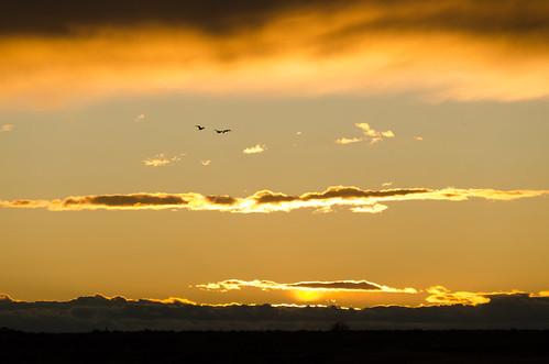 sunset newmexico roswell sandhillcrane nationalwildliferefuge bitterlakenwr
