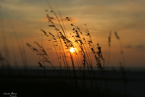 sunset beach sunrise florida palmtree fl clearwaterbeach clearwater curtisreese