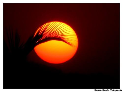 sunset tree coconut sunday
