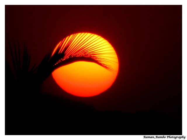 Sunset behind coconut trees .. :)