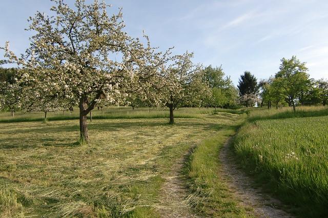 Der Frühling geht, der Sommer kommt.