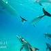 Bimini – delfíni pod lodí, foto: Atmoji ©WildQuest
