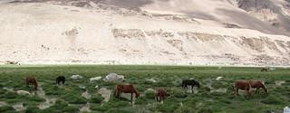 Khalsar, Nubra Valley | by Sreenath H B
