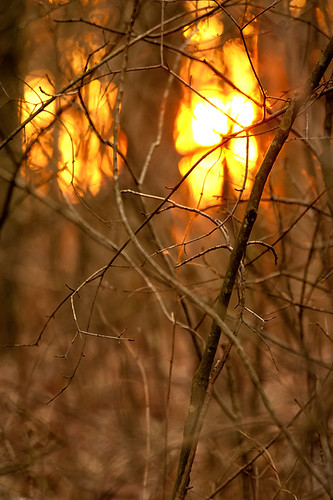 trees sunset ohio sun tree forest woods nikon branch branches twig twigs thicket d700