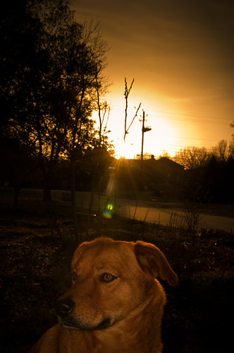 camera morning dog nature sunrise project march ginger spring huntsville flash alabama off 2012 366 strobist snapsofgingerdogblosgpotcom