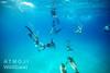 Bimini – jedno společné hejno, foto: Atmoji ©WildQuest