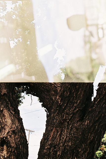 unfiished_tree