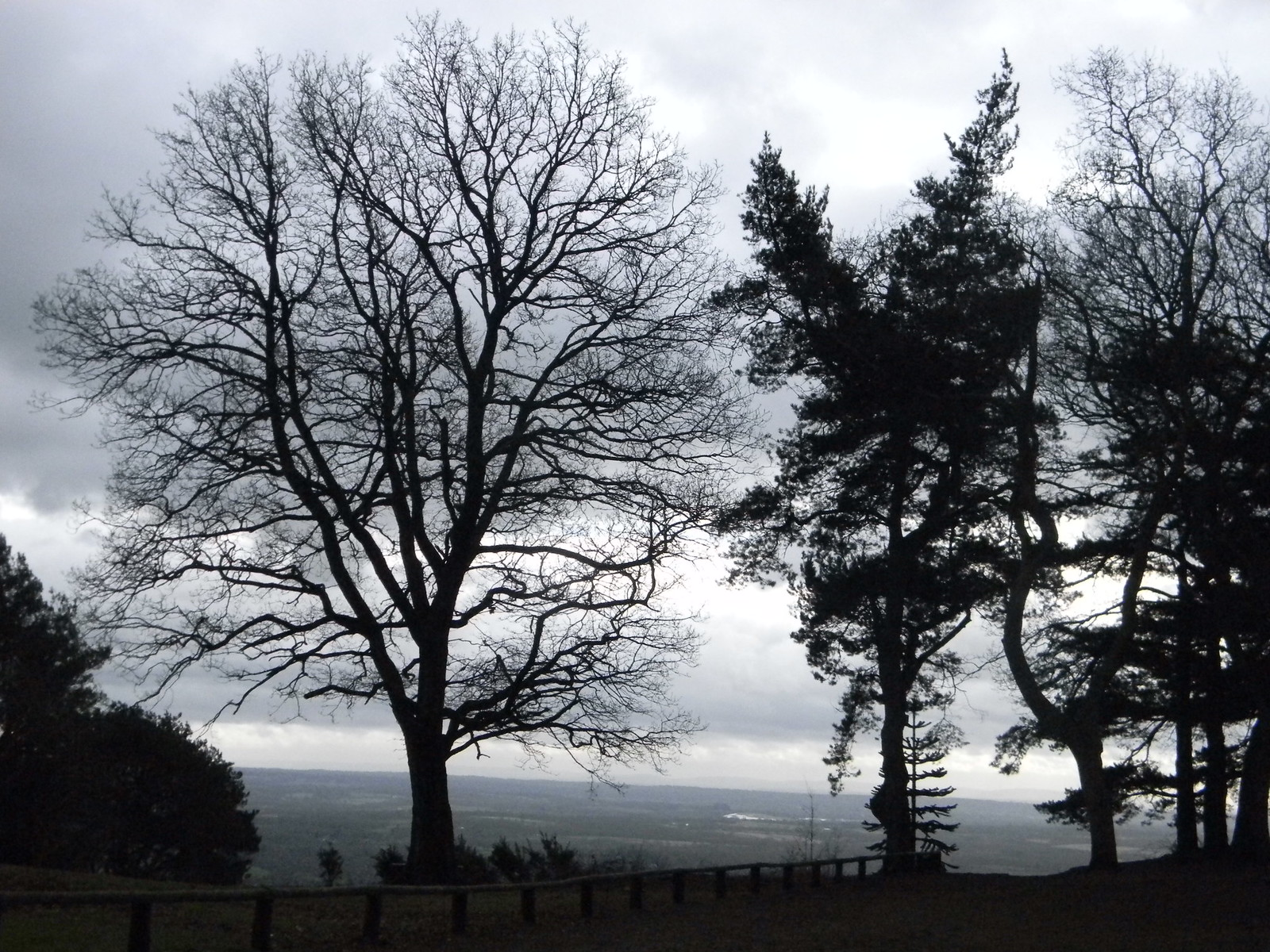 Trees, Leith Hill Holmwood to Gomshall