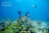 Bimini – šnorchlování u útesů, foto: Atmoji ©WildQuest