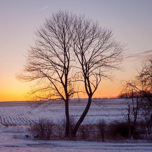 trees plants sun snow field sunrise unitedstates pennsylvania agriculture mineralpoint smcpa28mmf28