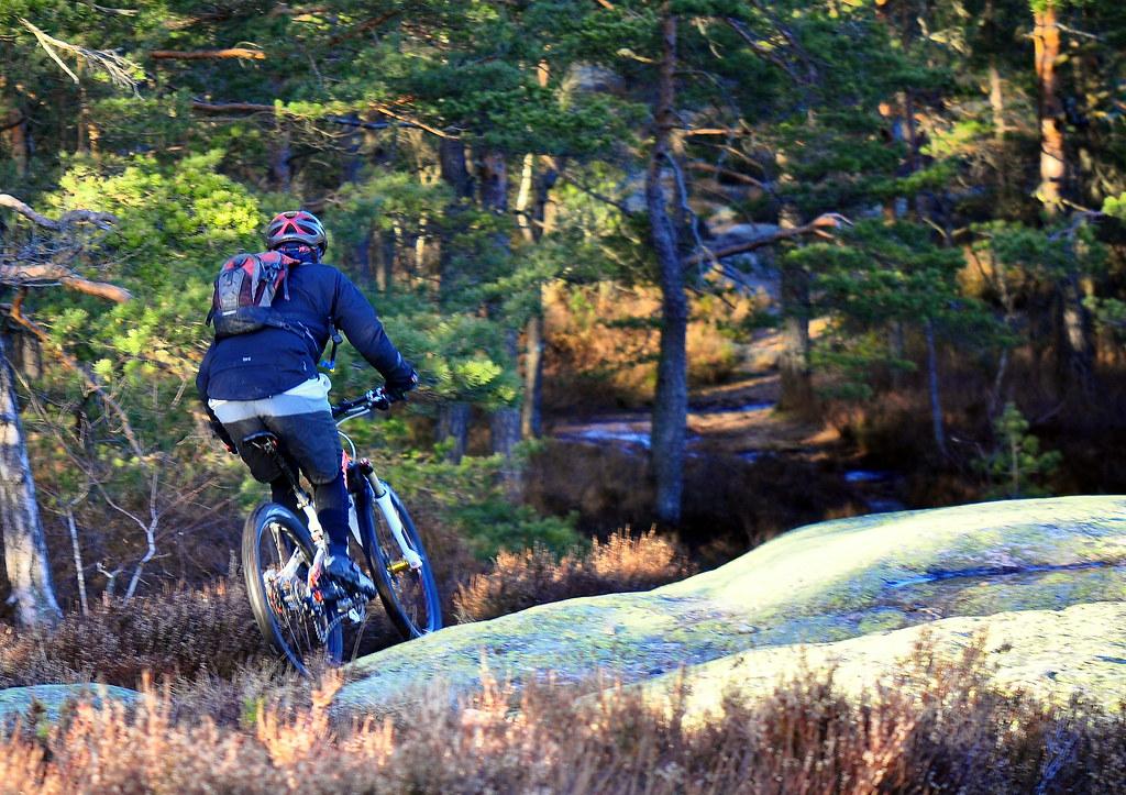Biking into the woods