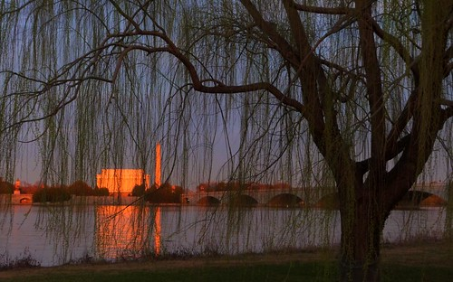 sunset tree washingtondc dc lincolnmemorial potomac washingtonmonument hdr goldenhour willowtree highdynamicrangephotography