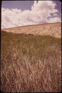 """Thick cover of prairie grass ends at """"reclaimed"""" mining spoils near Colstrip..., 06/1973."""