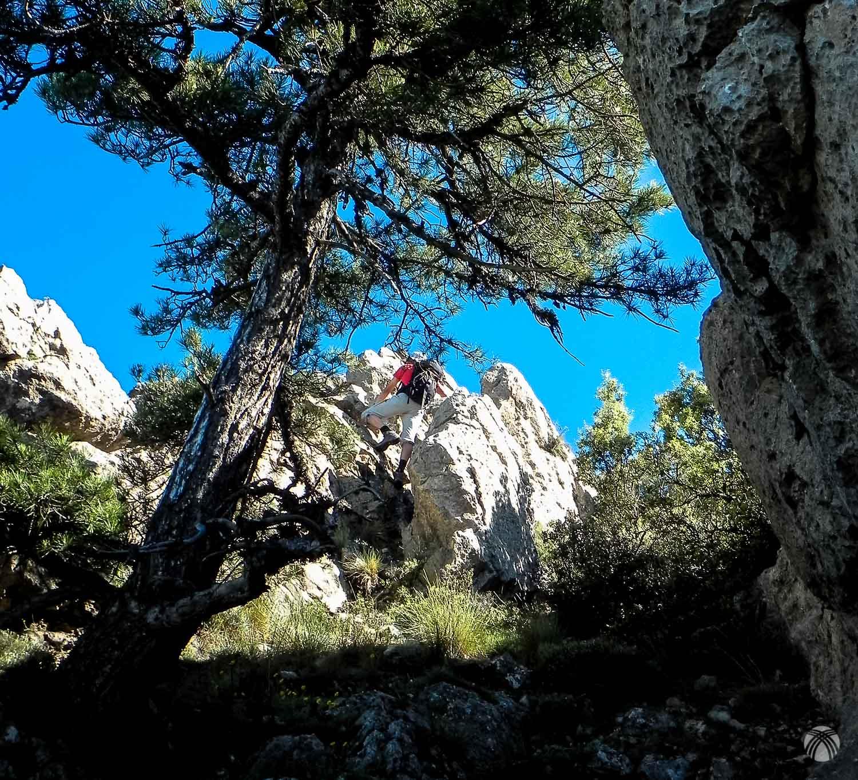 Roca y pinos