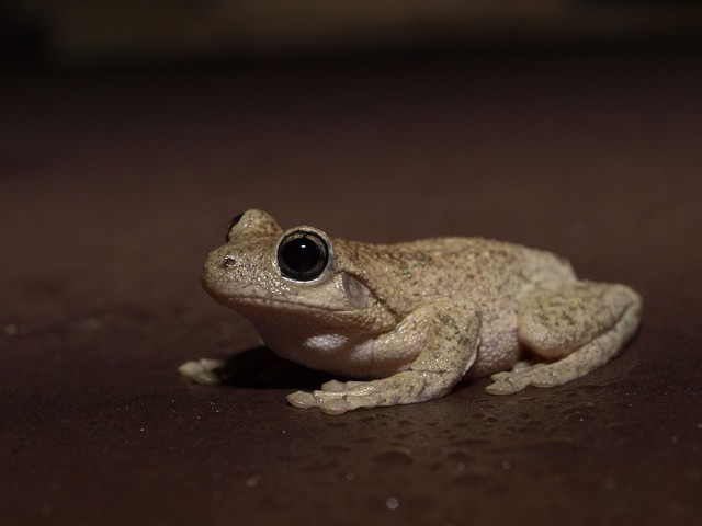 Flickriver: Photoset 'Frogs' by Photography Perspectiv
