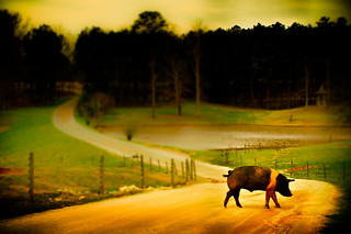 WHY DID THE PIG CROSS THE ROAD ........................... Serenbe - Chattahoochee Hills, Georgia - ASPG 02-24-2012 | by TheG-Forcers (Mike - CATCHING UP)
