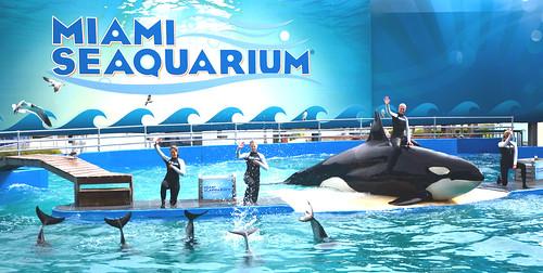 miami seaquarium 2012