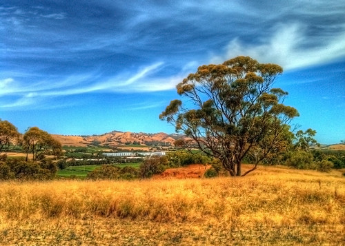 view southaustralia hdr iphone barrossavalley