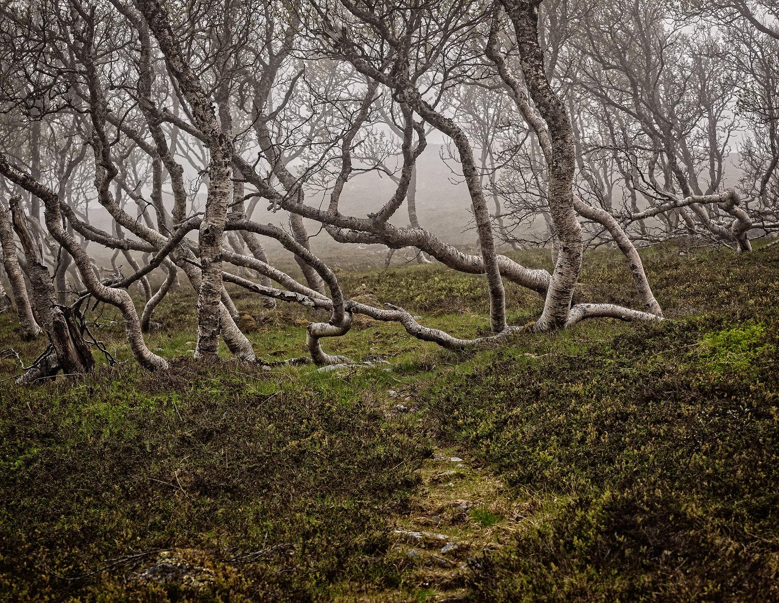 Inn i tåkeheimen / Into the mist