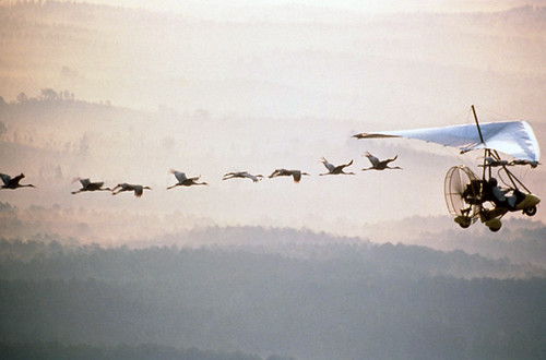 Whooping Crane Ultralight Migration | by USFWS Headquarters