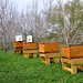 Sponsor a Hive 1 - Superstar Buzzers