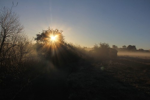 northerncalifornia sunrise dawn weeds napacounty foggysunrise sheehycreek