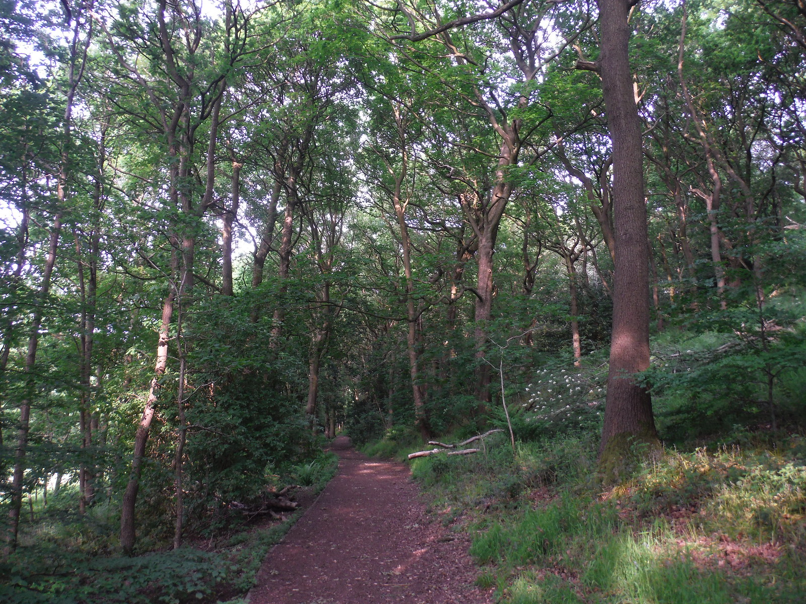 Parkbank Wood SWC Walk 267 - Sheffield Circular (via Porter, Limb, Sheaf and Gleadless Valleys)