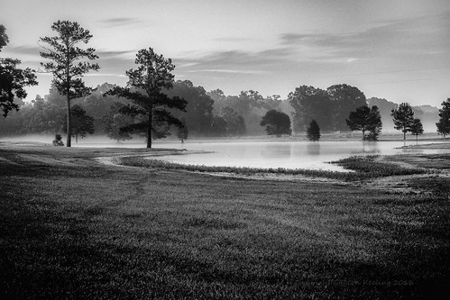 morning trees blackandwhite monochrome landscape pond